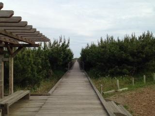 鹿島灘海浜公園 海沿い 道
